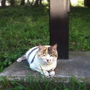 平塚市総合公園のネコ、猫、ねこ!たくさん出会いたいなら、早朝がおすすめ!