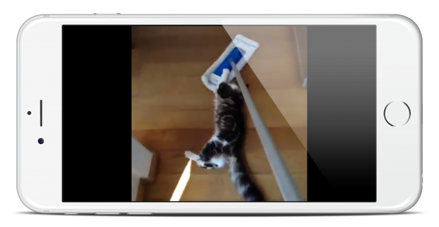 cat-shake3